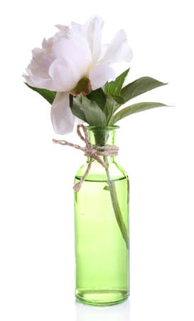 Beautiful white peony flower in glass vase, isolated on white photo