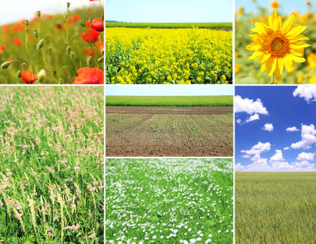 Collage of beautiful fields photo