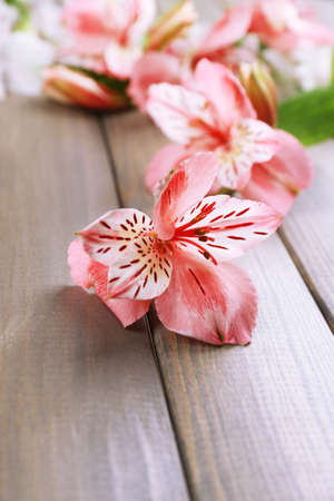 alstromeria: Beautiful Alstroemeria flowers on wooden table