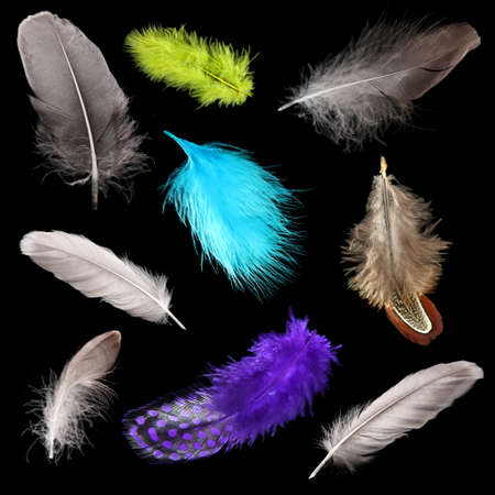 Collage of colorful feathers on black background photo