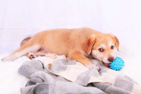 Cute beige puppy playing on white carpet, on light background photo