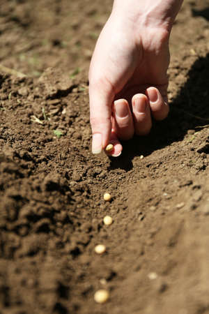 Sowing seeds into soil photo
