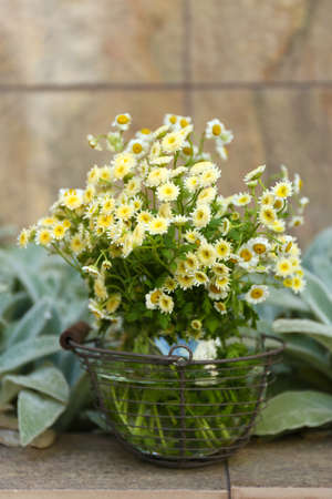 wil: Garden decoration with wildflowers, outdoors Stock Photo