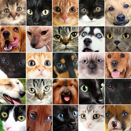 Collage of different cute pets photo