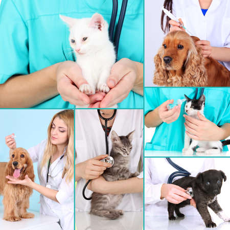 Collage of pets at vet photo