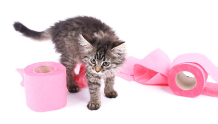 Cute kitten playing with roll of toilet paper, isolated on white photo