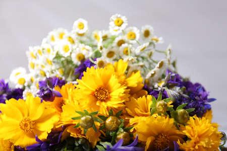 Beautiful wild flowers on light background photo