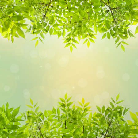 Frame of green leaves Stock Photo