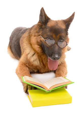 scamper: Funny cute dog with books isolated on white