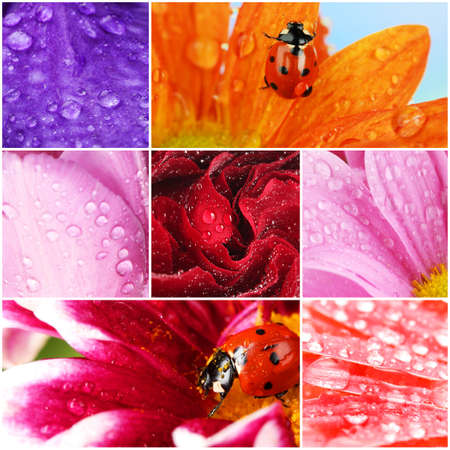 Collage of beautiful flowers with water drops photo