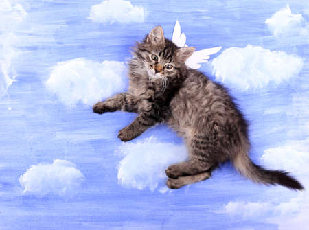 Beautiful kitten with paper wings, on bright background photo