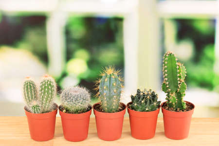 Collection of cactuses, on windowsill photo