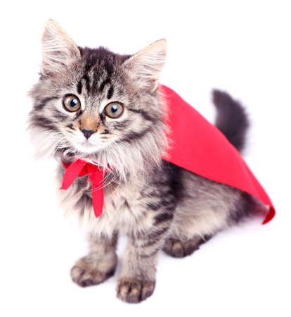 super powers: Cat in red cloak, isolated on white.