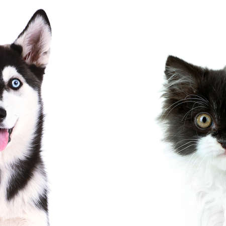 Cute cat and dog faces isolated on white photo