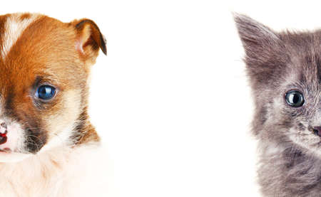 cute pussy: Cute cat and dog faces isolated on white