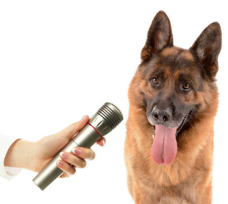 scamper: Cute dog with microphone isolated on white Stock Photo