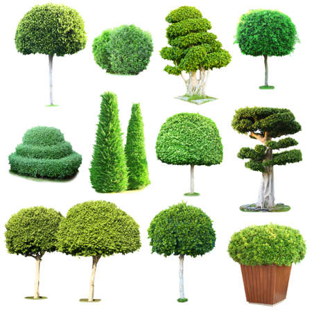 cedar tree: Collage of green trees and bushes isolated on white