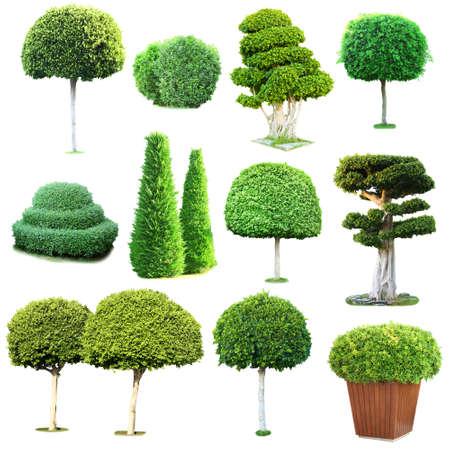 Collage verde de los árboles y arbustos aislados en blanco