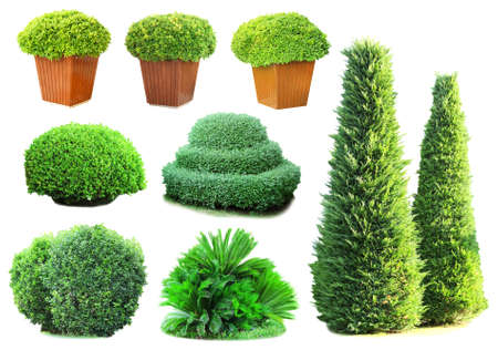 bush trimming: Collage of green bushes isolated on white