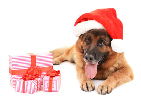 scamper: Funny cute dog in Christmas hat with gifts isolated on white