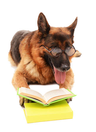 german shepard: Funny cute dog with books isolated on white