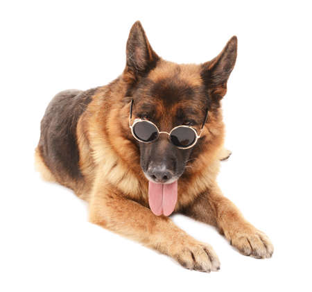 scamper: Funny cute dog in glasses isolated on white