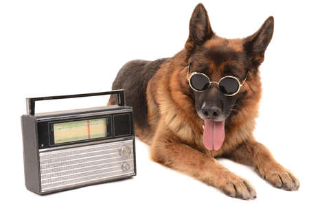 scamper: Funny cute dog with radio isolated on white Stock Photo