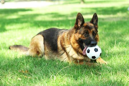 scamper: Funny cute dog in park
