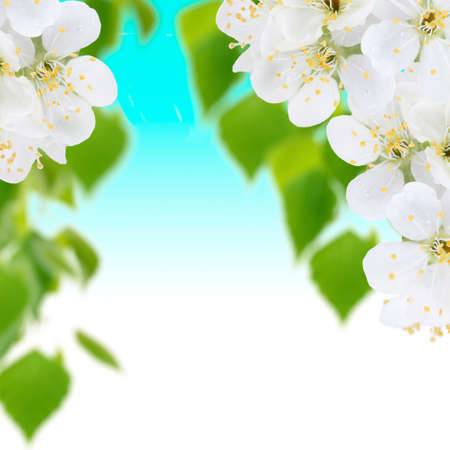 Blooming tree branch with white flowers photo