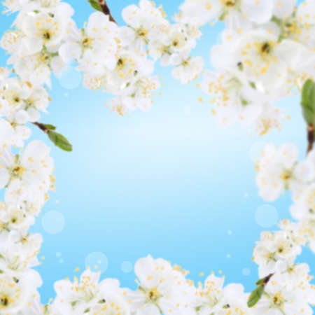 Frame of blooming tree branch with white flowers on blue background photo