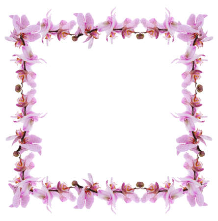Frame of beautiful blossom isolated on white photo