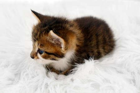 Cute little kitten on fur rug photo