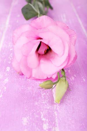 Beautiful eustoma flower on wooden background photo