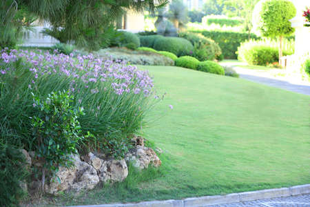 Mooie groenvoorzieningen in de tuin Stockfoto