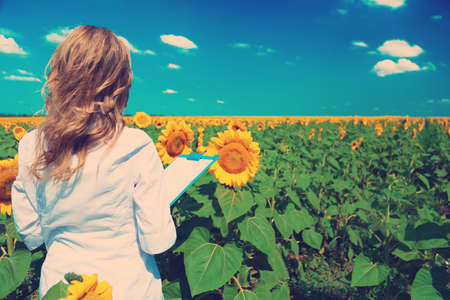 agronomist: Agronomist with folder in sunflowers field
