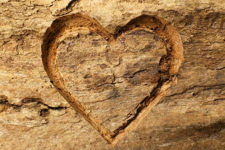 Hart gesneden op boomschors