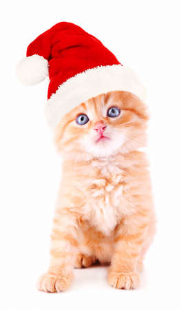 Little kitten in Santa Claus hat isolated on white photo