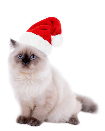 Cat in Santa Claus hat isolated on white photo