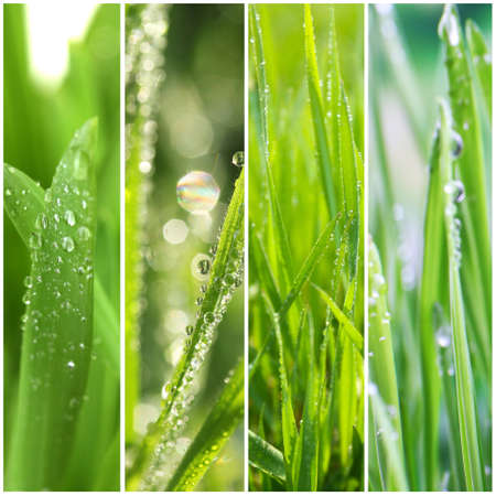 Nature collage. Macro grass with water drops photo
