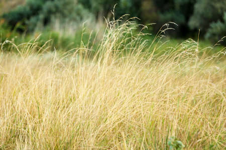 spikelets: Beautiful meadow with spikelets Stock Photo