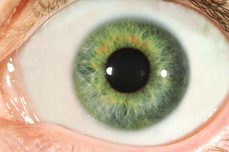 gray eyes: Human eye close-up Stock Photo