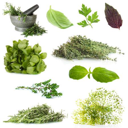 garnishing: Fresh herbal collage