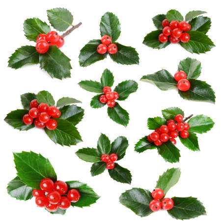 Leaves of mistletoe with berries collage, isolated on white 版權商用圖片 - 34095366