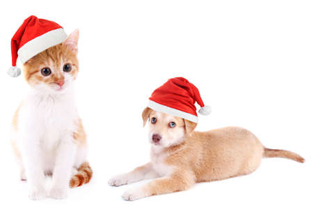 Little kitten and cute Golden Retriever puppy with Santa Hat isolated on white Stock Photo