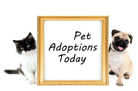 Pet adoption concept. Funny pug dog and little kitten isolated on white