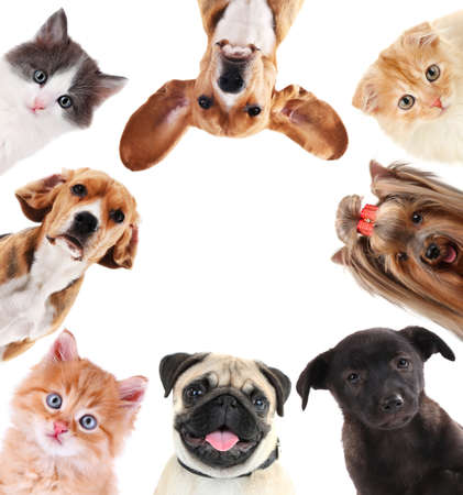 Collage of cute pets isolated on white Foto de archivo