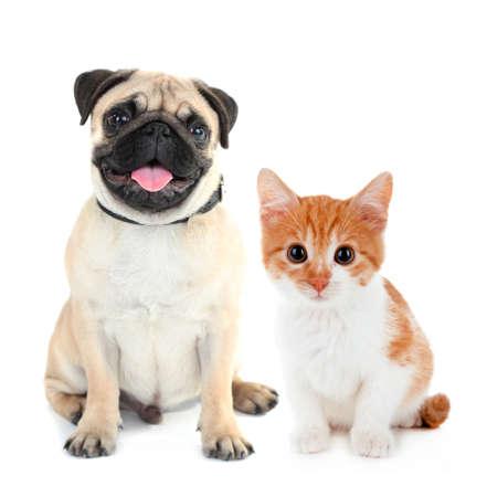 おかしいパグ犬と白で隔離赤い子猫