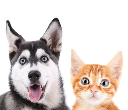 小さな赤い子猫と白で隔離ハスキーの子犬