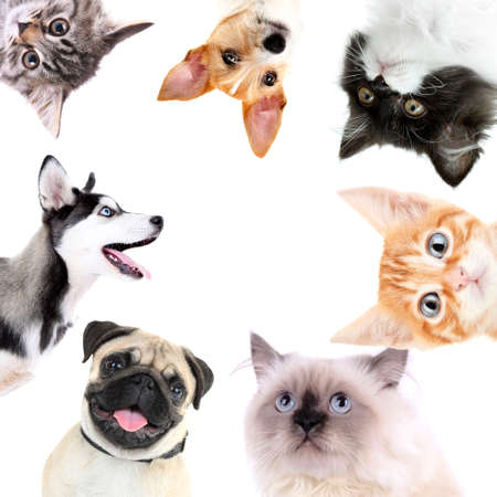 animal pussy: Collage of cute dogs and cats isolated on white