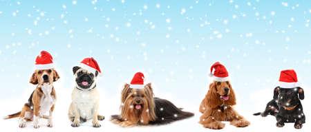 Cute pets in Santa hats on blue  photo
